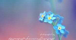 shaban_wallpaper